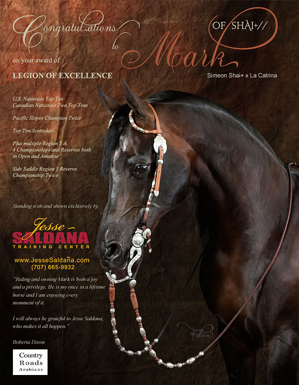 Mark of Shai Stallion photo